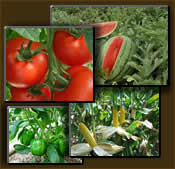 Growing vegtable gardens on your land